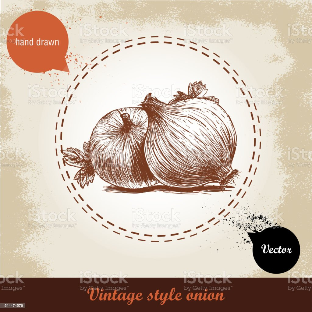 Vintage retro background with hand drawn sketch onions vector art illustration