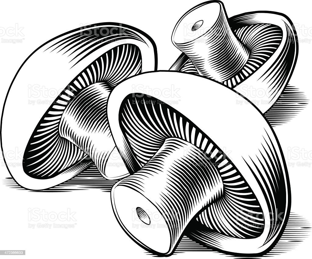 Vintage retro woodcut mushrooms vector art illustration