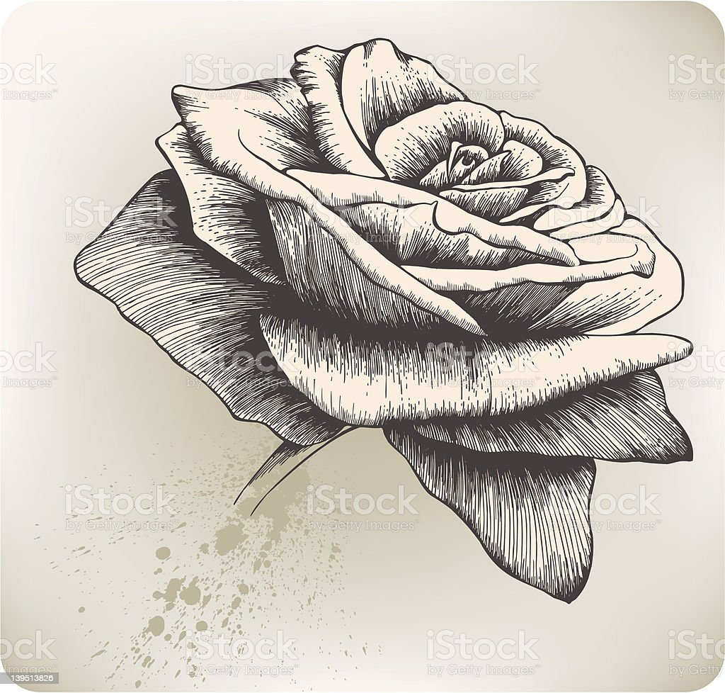 Vintage Rose, hand-drawing. Vector illustration. royalty-free stock vector art