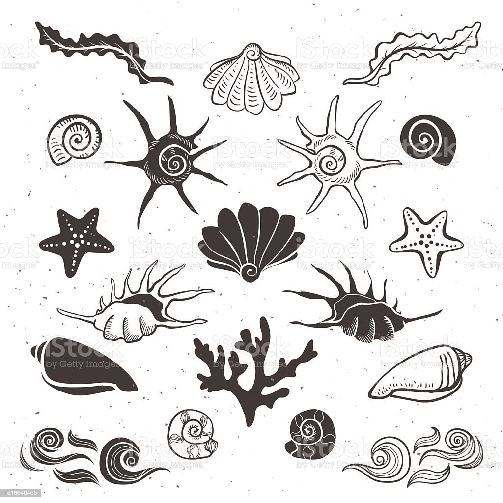 Vintage sea shells, starfish, seaweed, coral and waves. vector art illustration