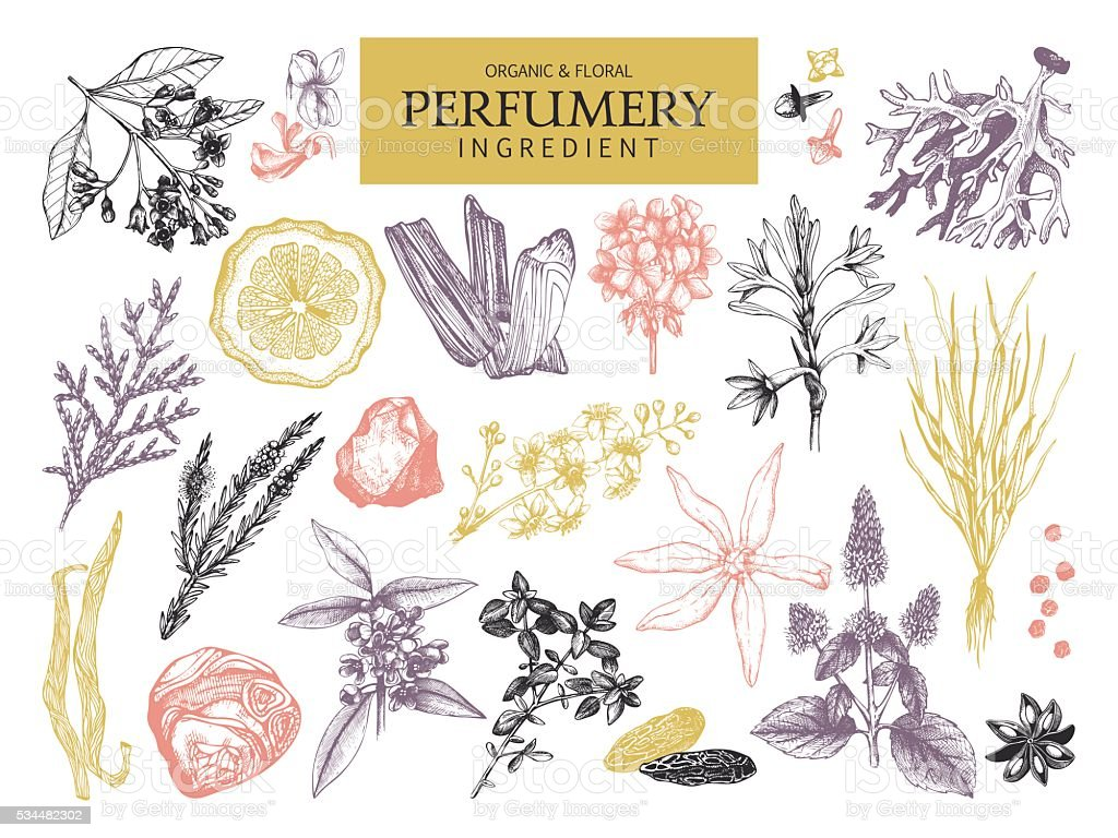 Vintage set of aromatic plants for perfumes and cosmetics. vector art illustration