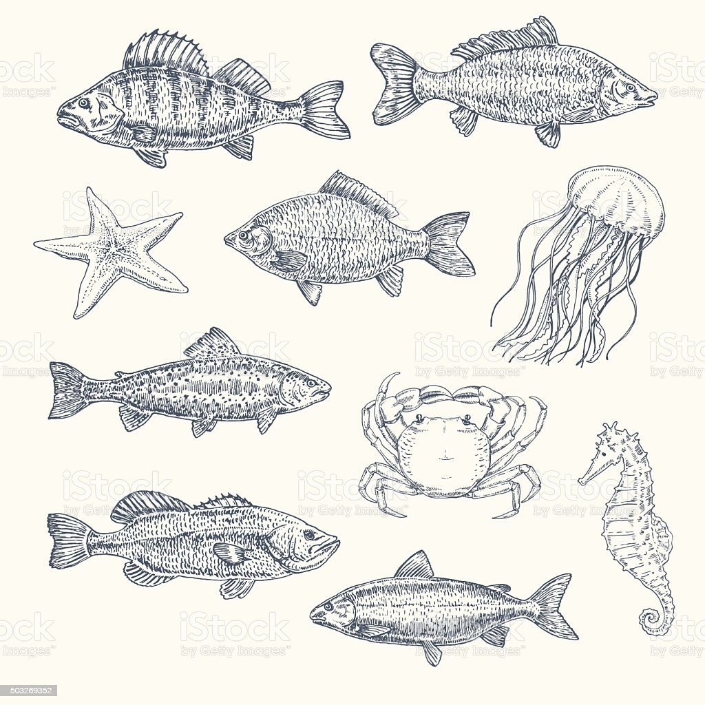 Vintage set of sea creatures. hand drawn illustration, sketch vector art illustration