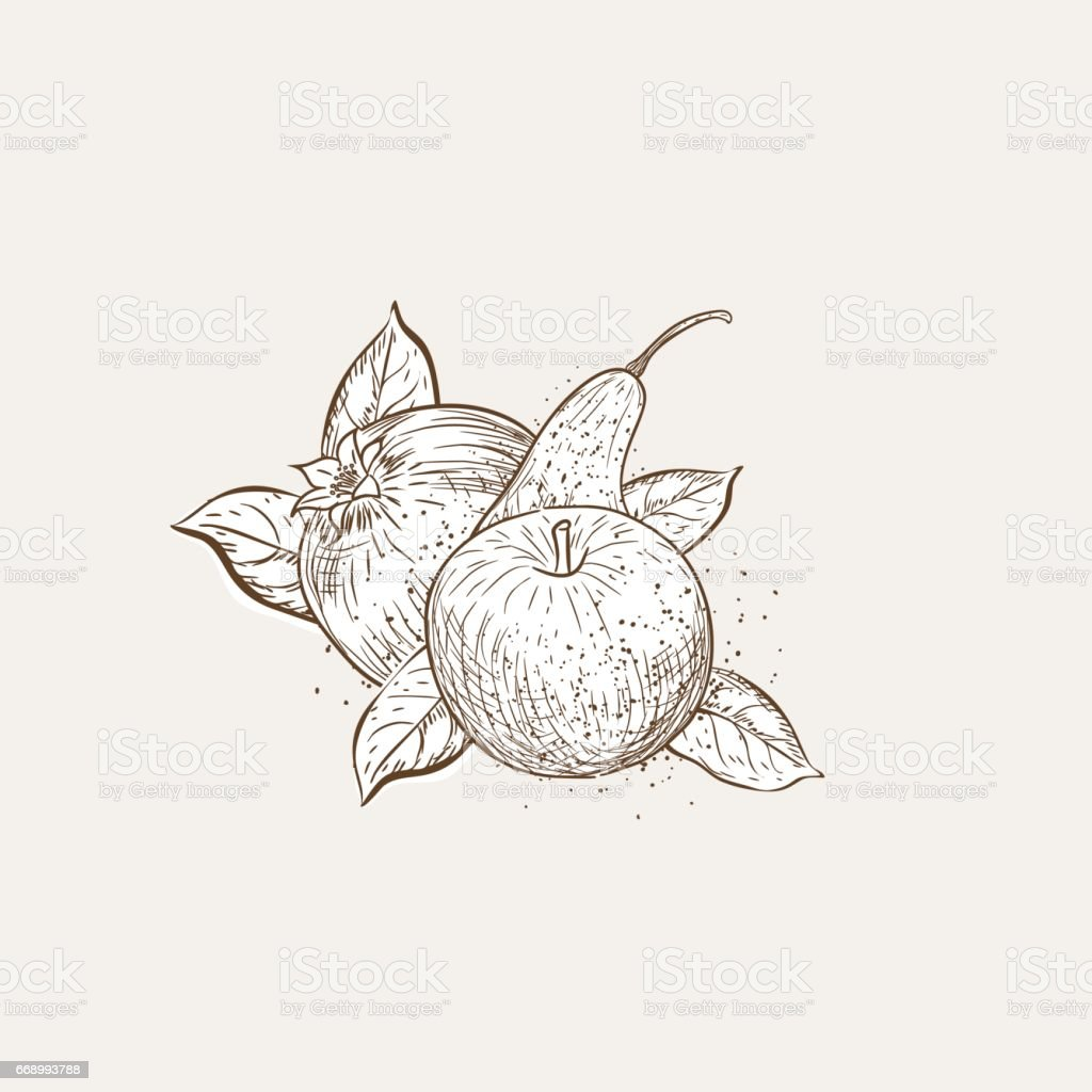 Vintage Style Hand Drawn Fruit With Texture vector art illustration
