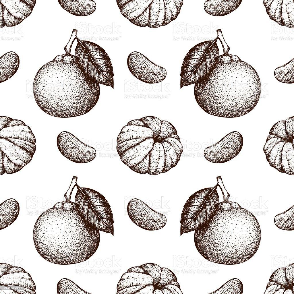 Vintage tangerine background isolated on white vector art illustration