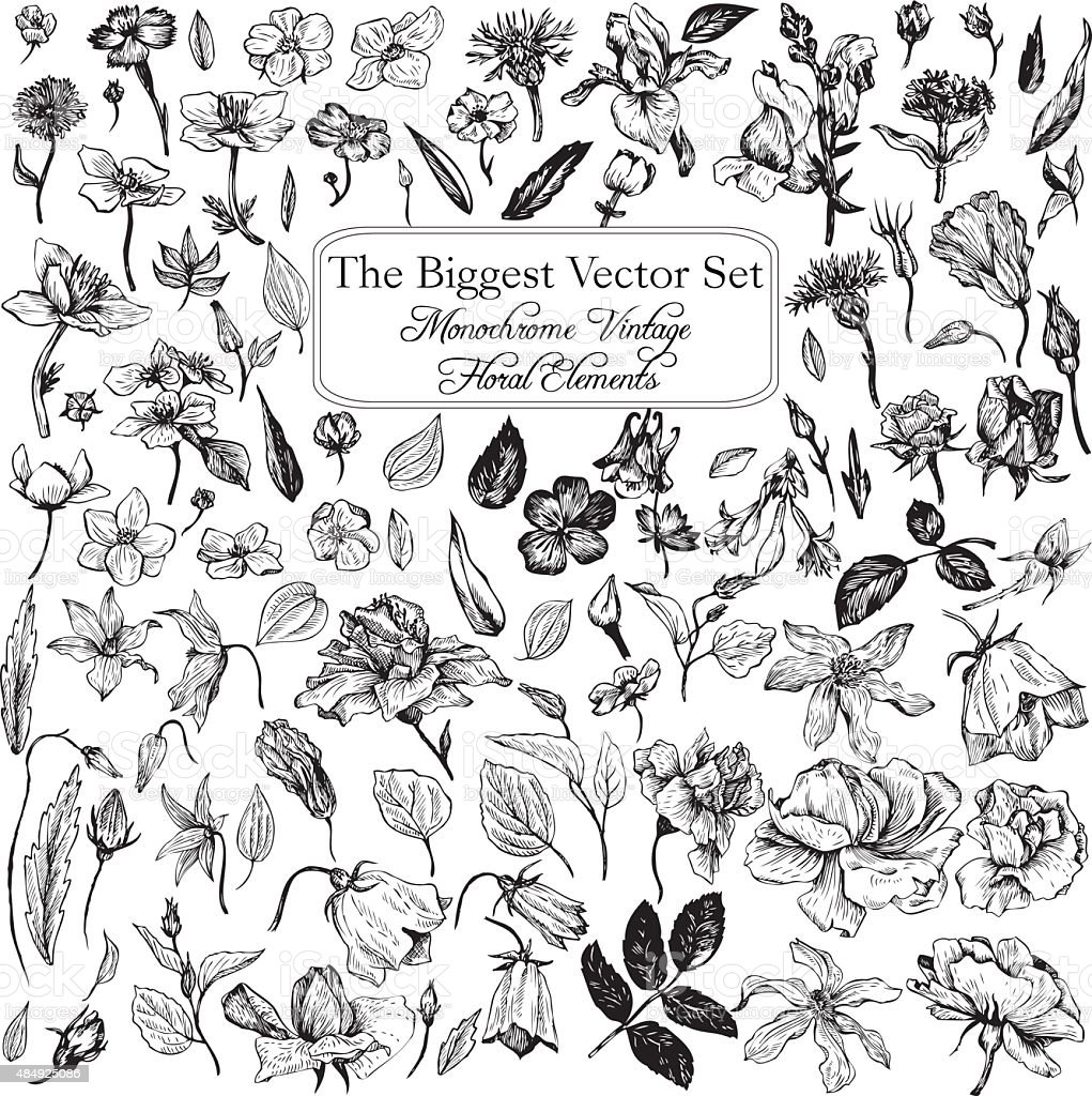 vintage vector floral set vector art illustration