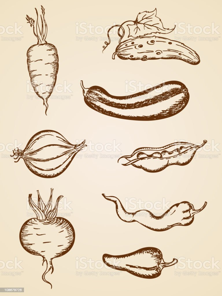 vintage vegetables set vector art illustration