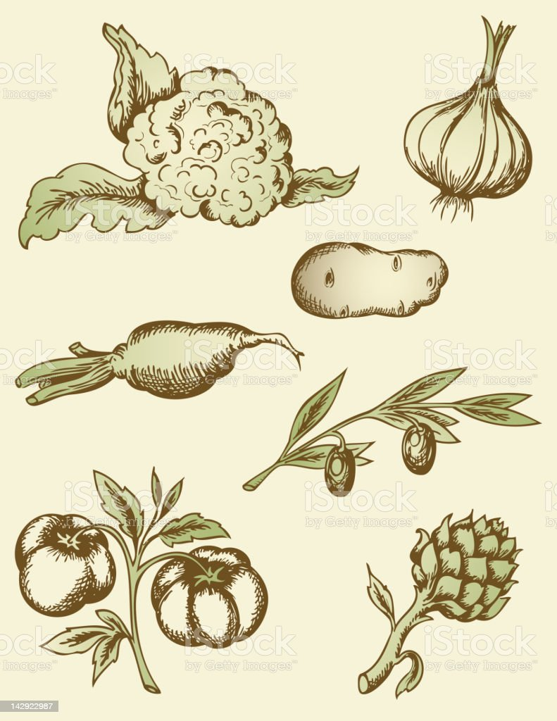 vintage vegetables vector art illustration