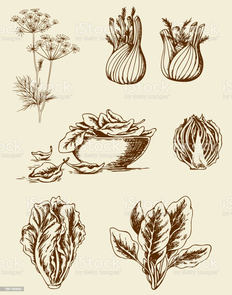 Vintage vegetables royalty-free stock vector art