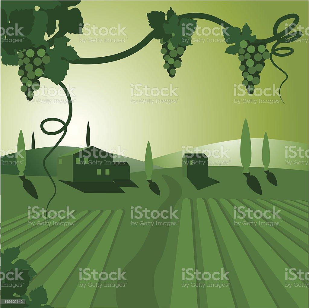 Vinyard vector art illustration