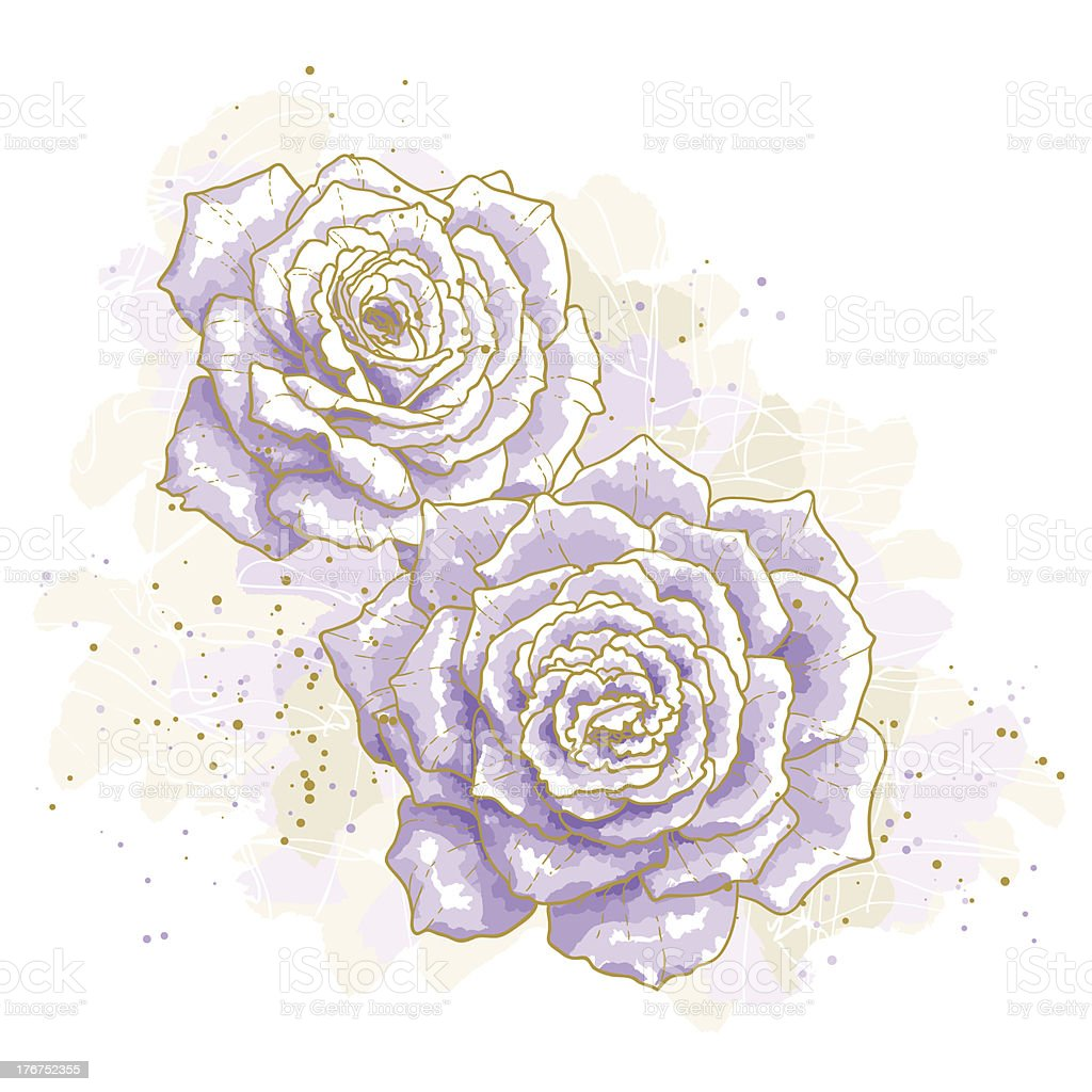 Violet roses on white background royalty-free stock vector art