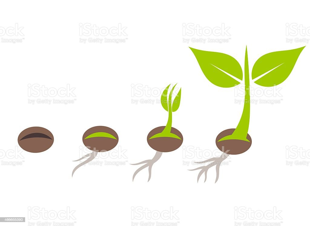 Visualization of plant germination vector art illustration