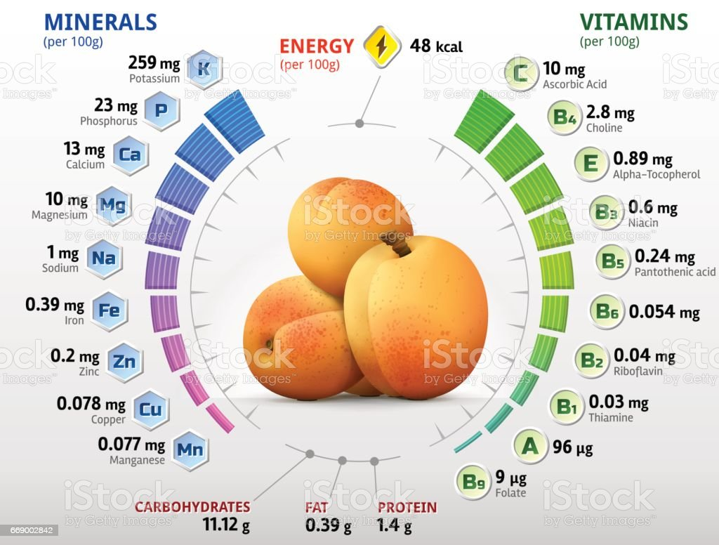 Vitamins and minerals of apricot fruit vector art illustration
