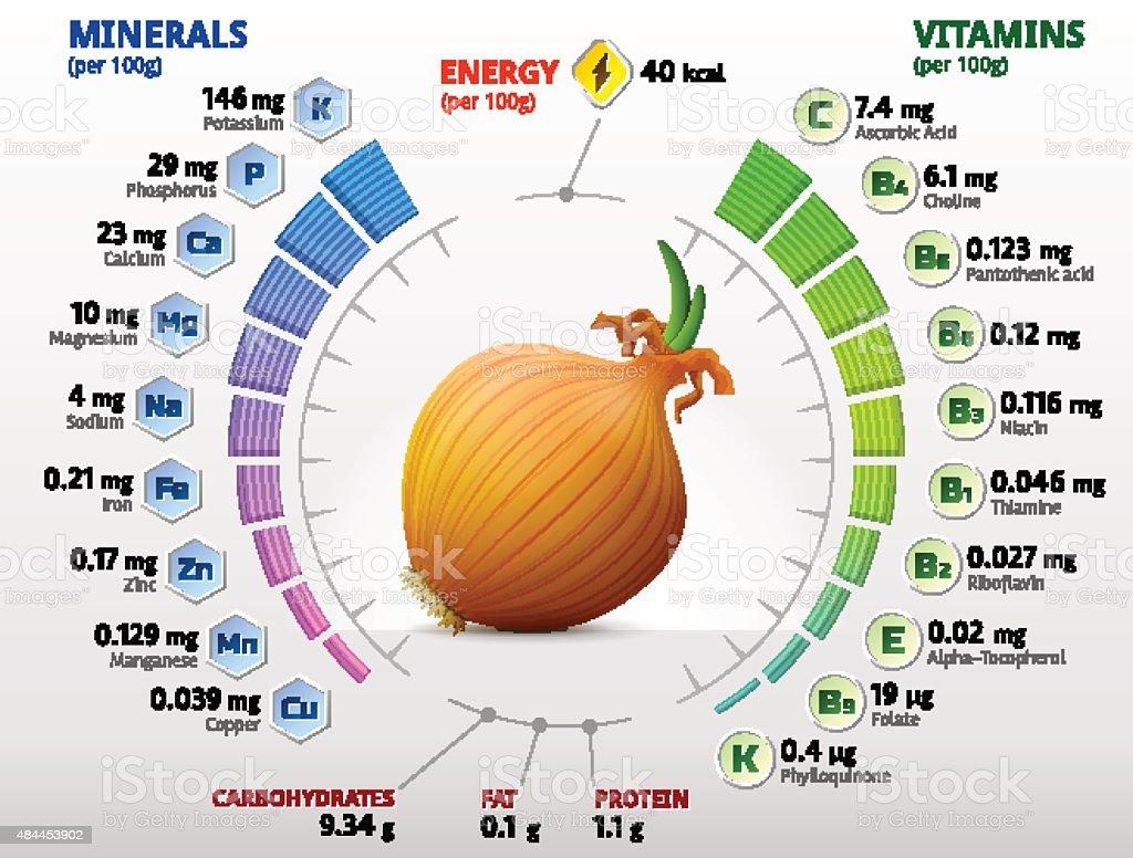 Vitamins and minerals of common onion vector art illustration