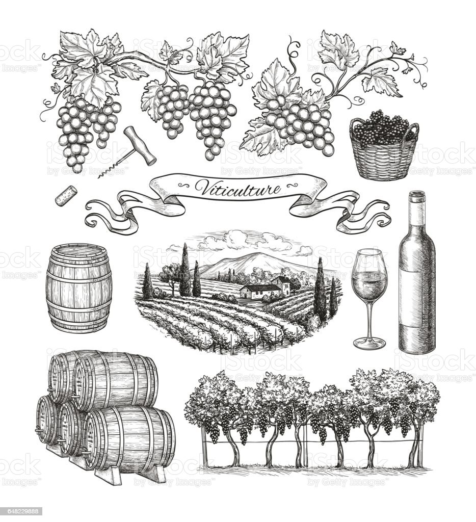 Viticulture big set. vector art illustration