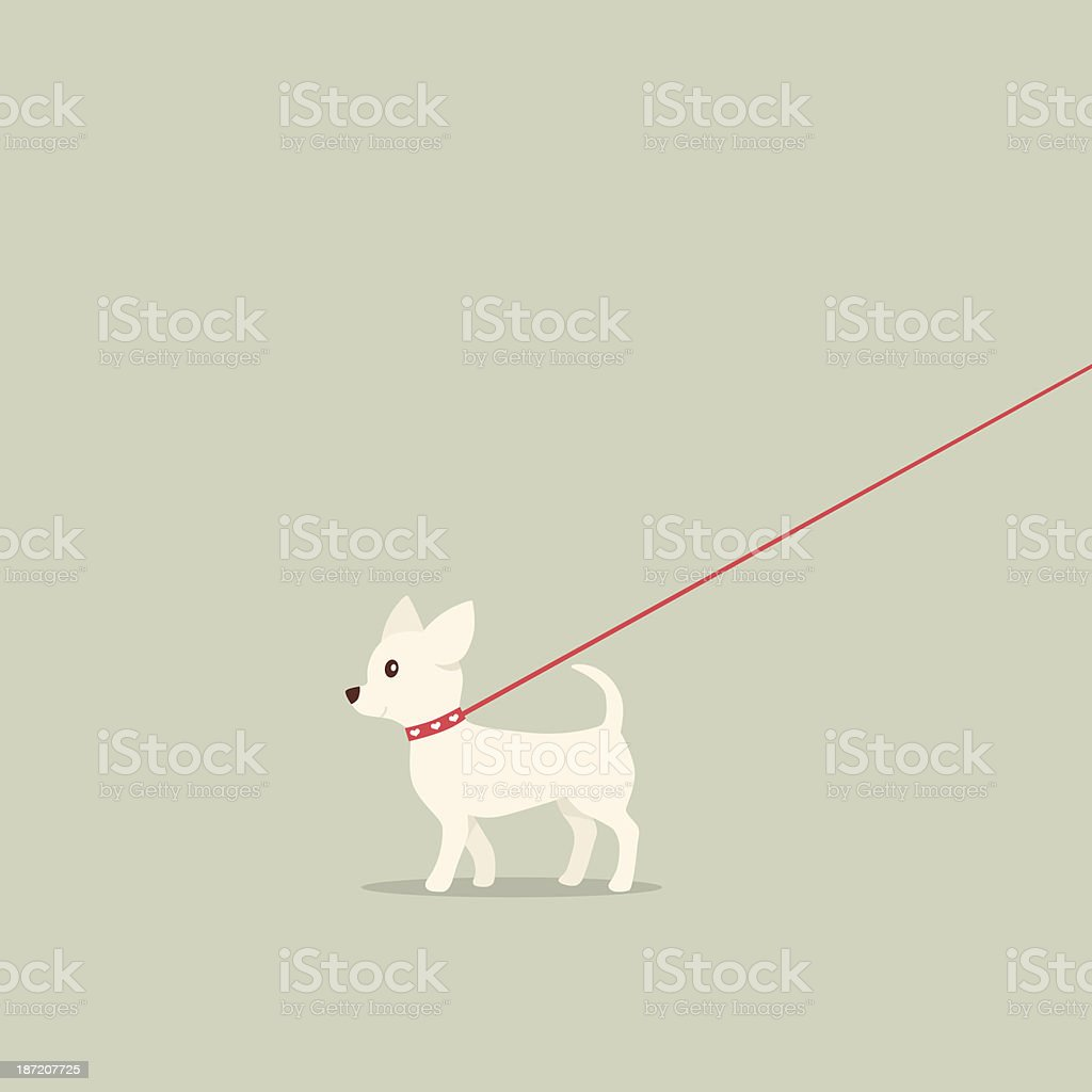 Walking dog on lead Chihuahua vector art illustration