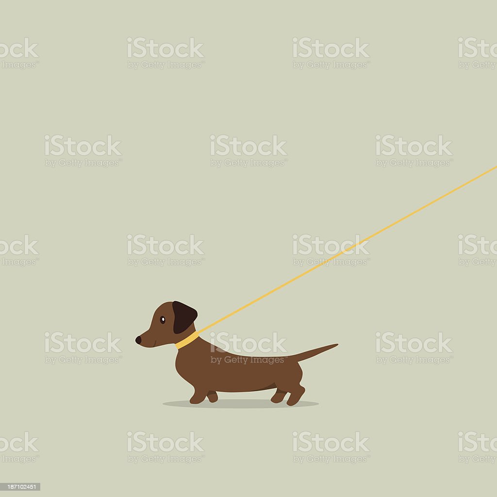 Walking dog on lead Dachshund vector art illustration