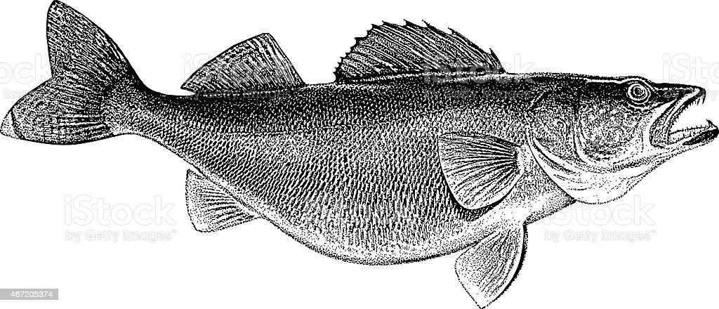 Walleye Engraving vector art illustration