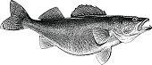 Walleye Engraving