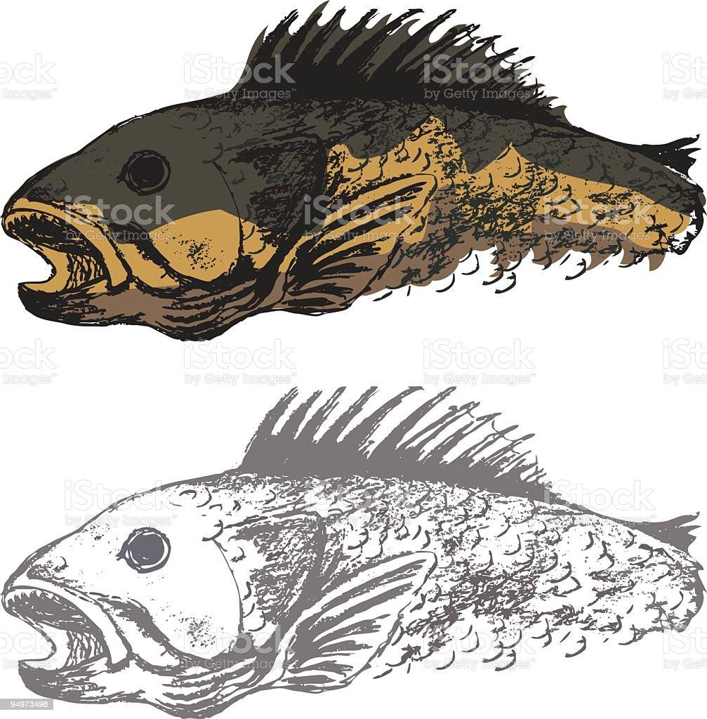 Walleye Fish illustration vector art illustration
