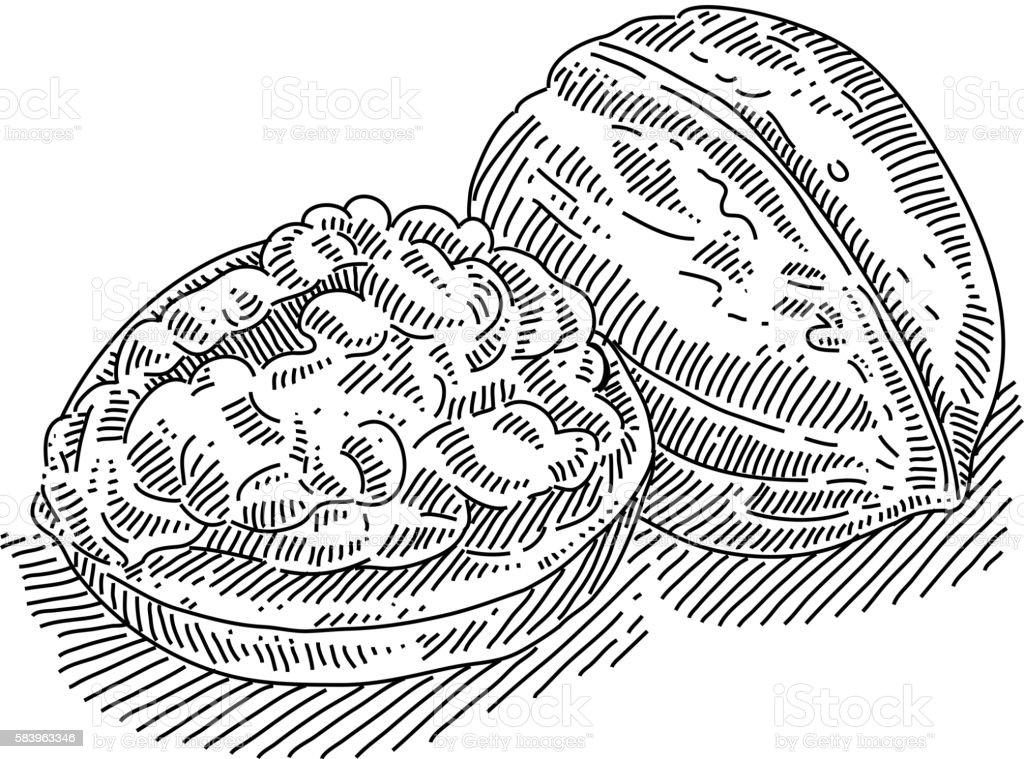 Walnut Drawing vector art illustration