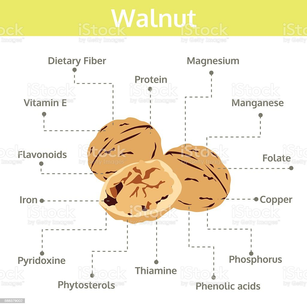 walnut nutrient of facts and health benefits, info graphic nut vector art illustration