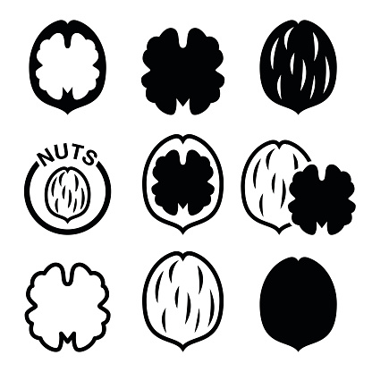 Walnut Clip Art, Vector Images & Illustrations - iStock