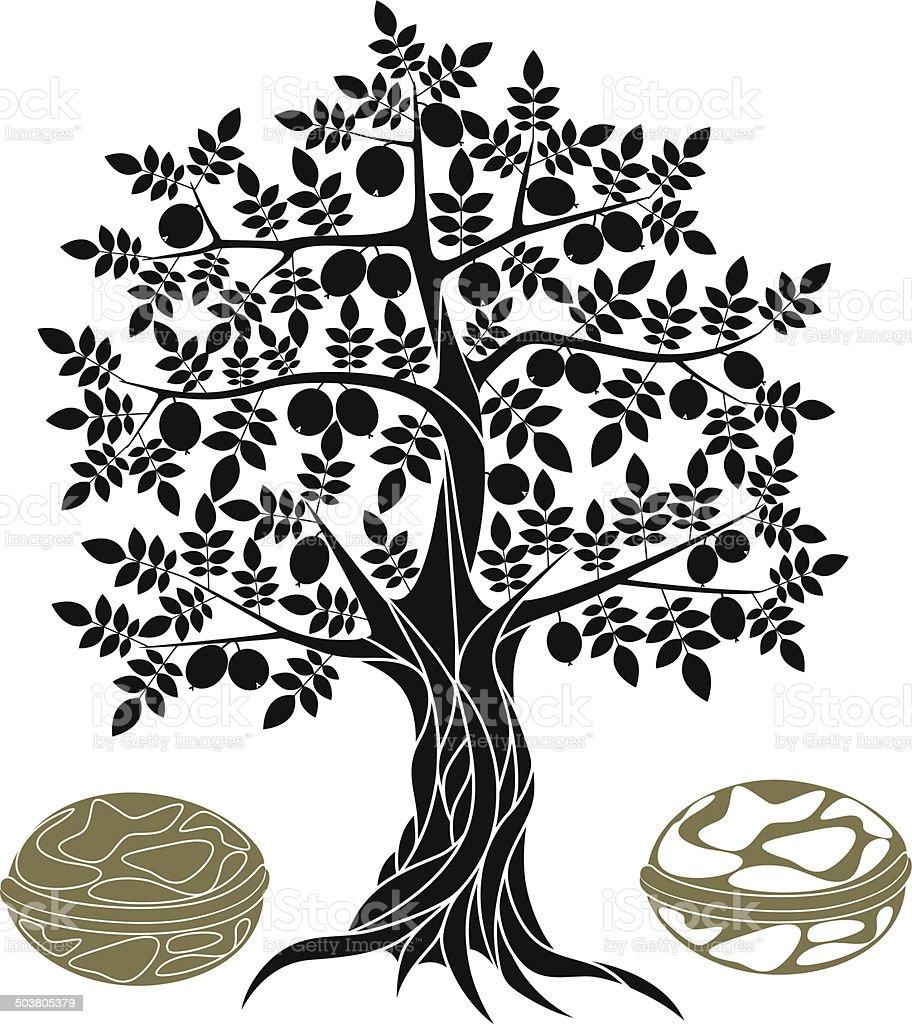 Walnut tree vector art illustration