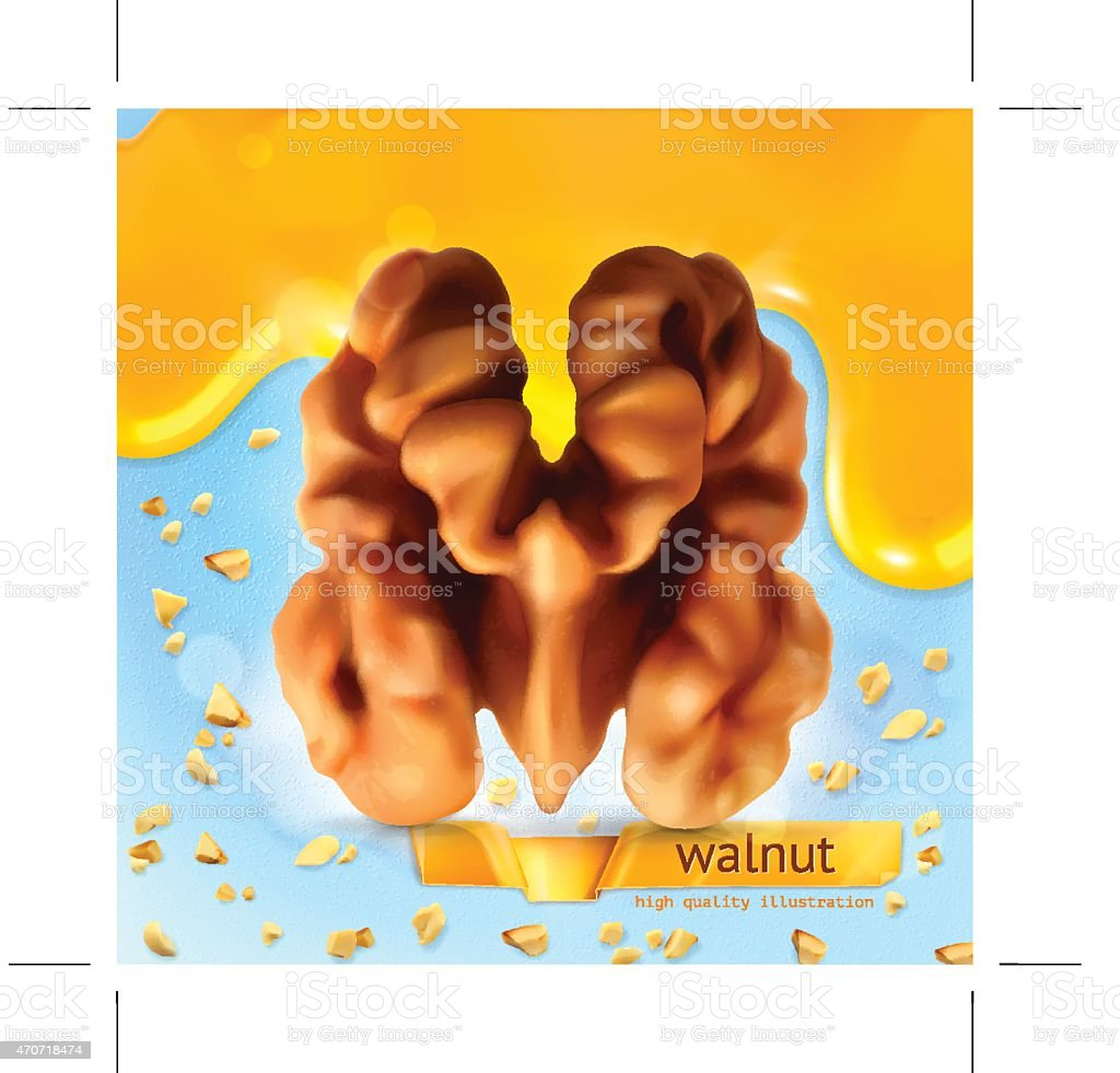 Walnut, vector background vector art illustration