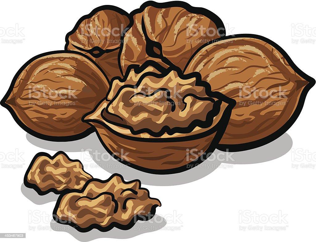 walnuts vector art illustration