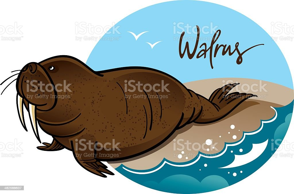 Walrus royalty-free stock vector art