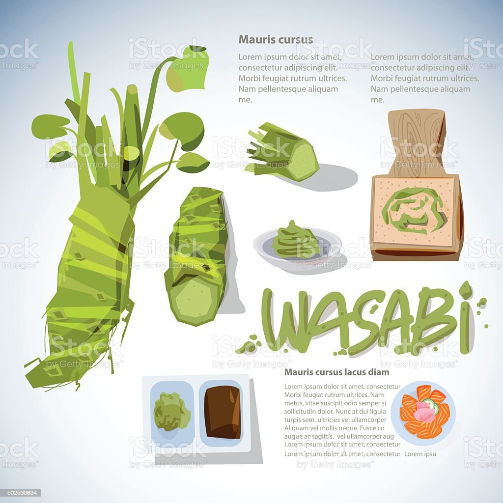 wasabi root or plant set. grated fresh wasabi vector art illustration