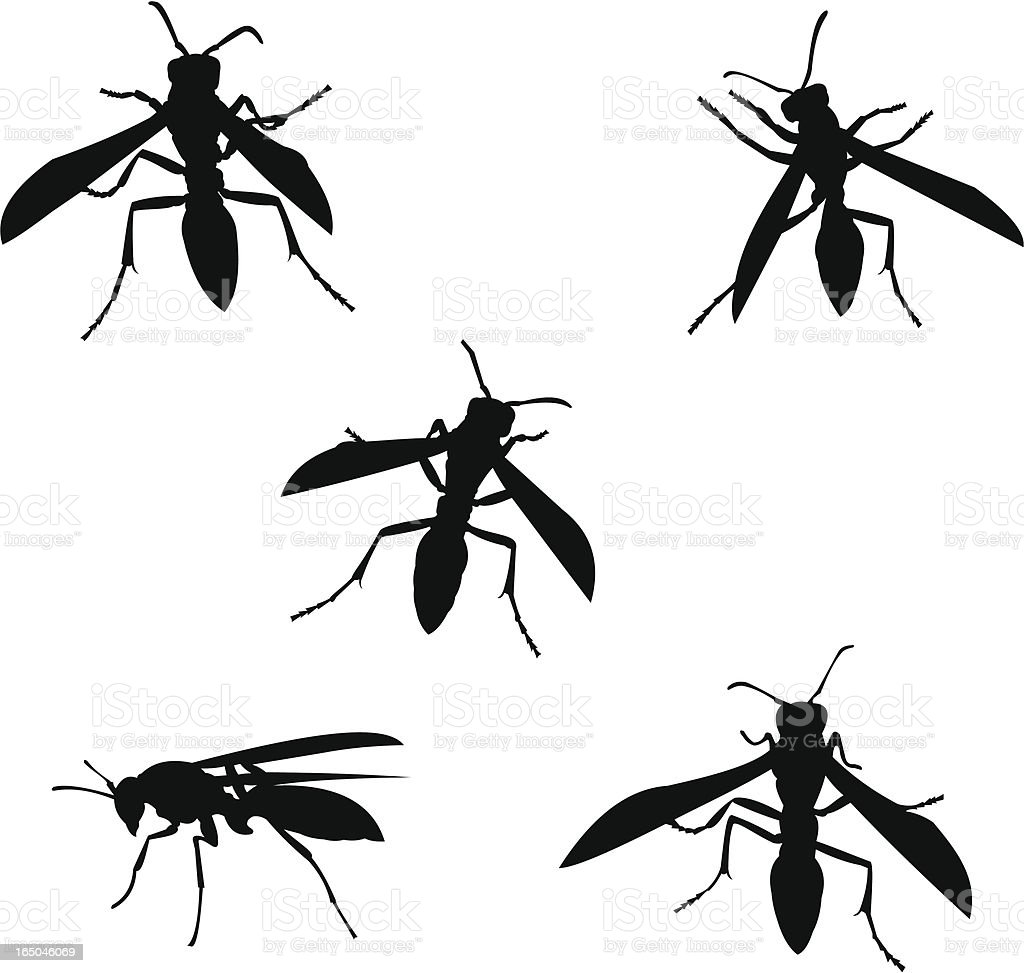 Wasp silhouettes vector art illustration