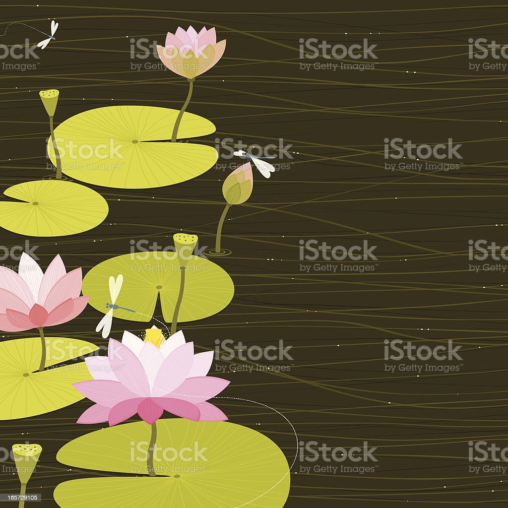 Water lilies vector art illustration