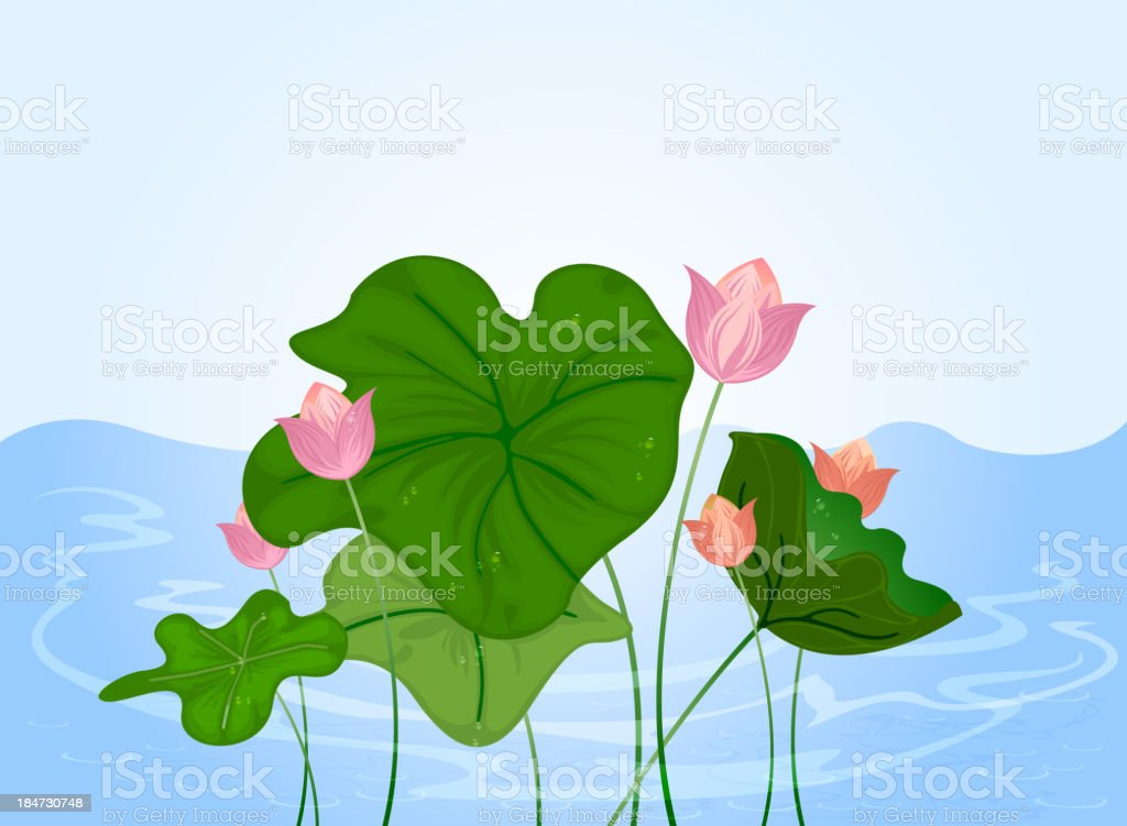 Water lily vector art illustration