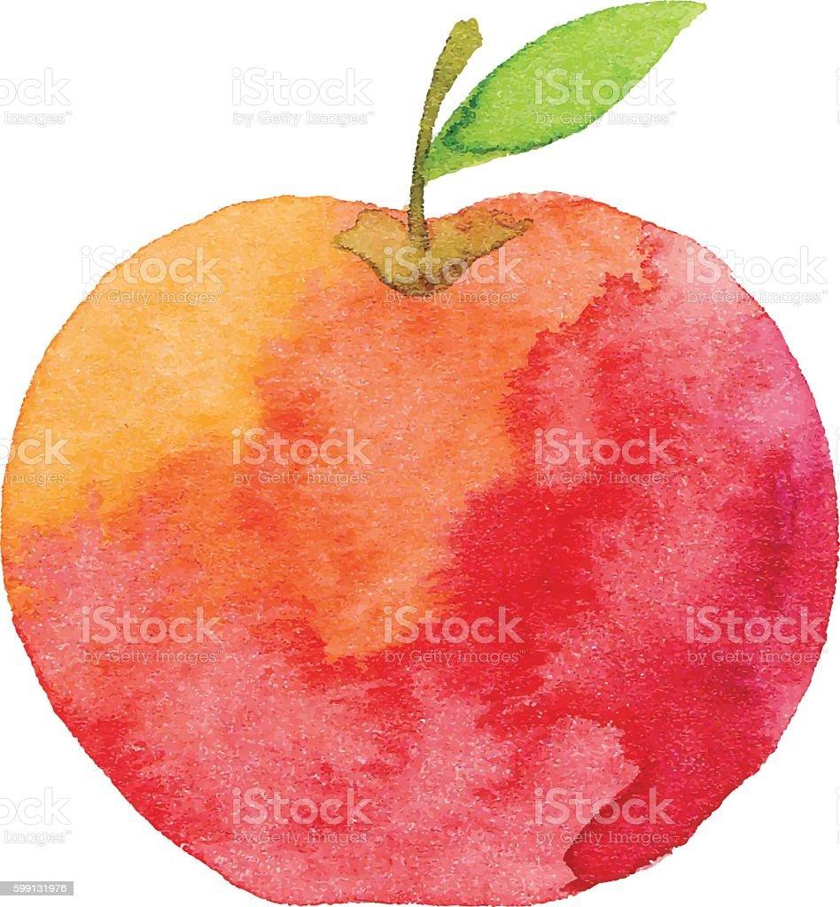 Watercolor Apple vector art illustration