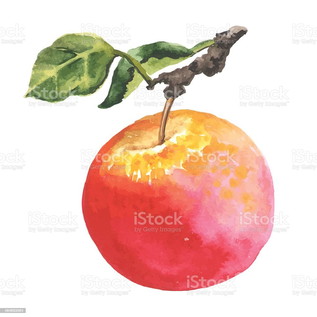 Watercolor apple with leaf vector art illustration