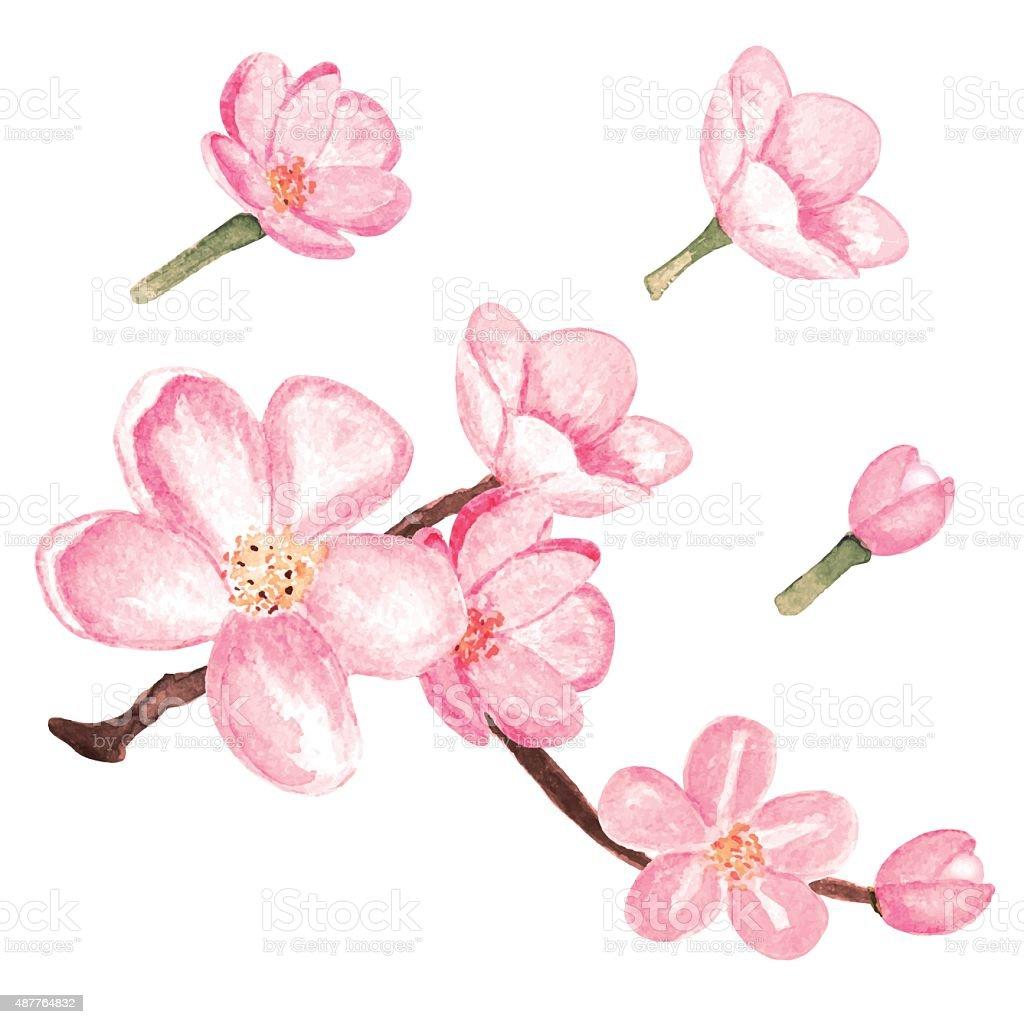 Watercolor Blossom Sakura Pink Cherry Tree Flowers stock ...