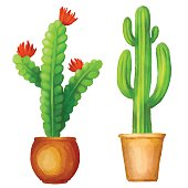 Image result for watercolor cactus crate