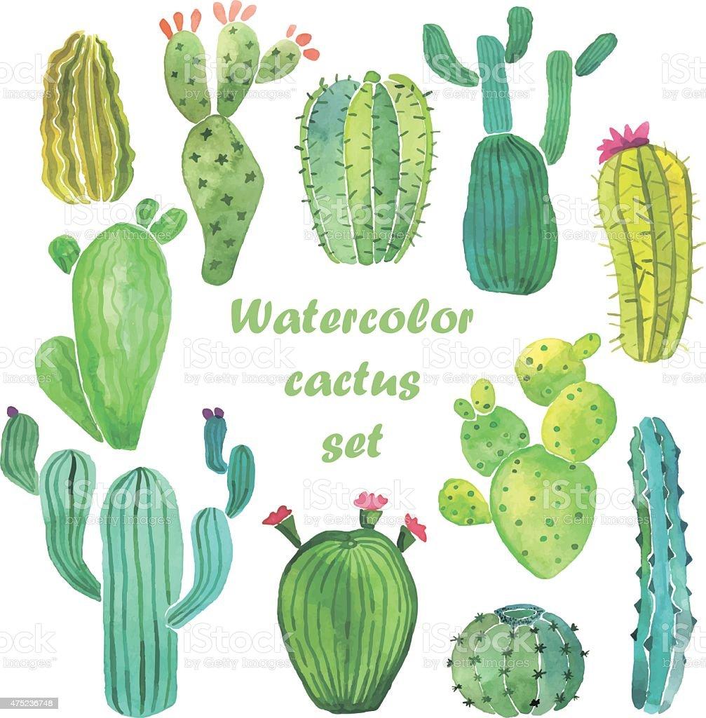 Watercolor cactus set vector art illustration