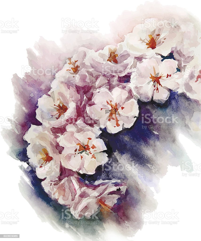 watercolor cherry blossom. Flower painting. Vector EPS 10. royalty-free stock vector art