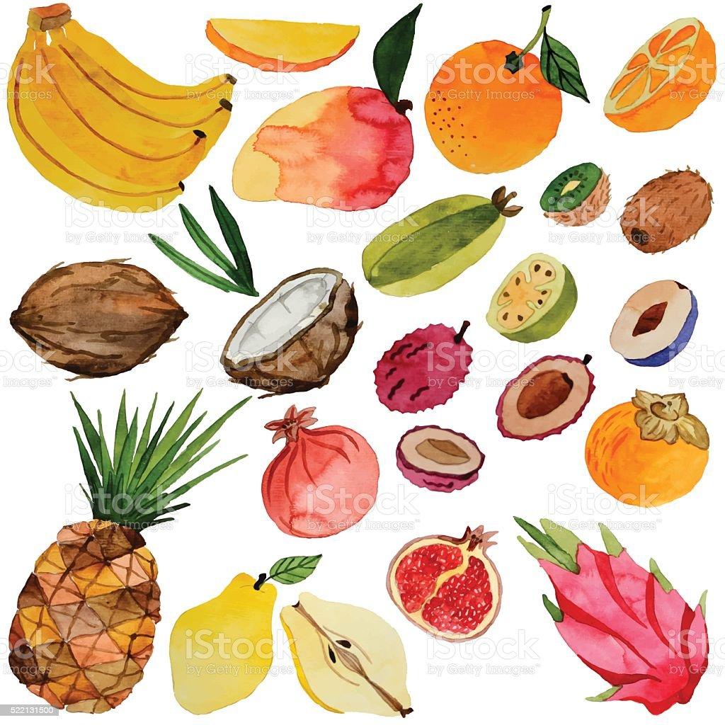 watercolor fruits, vector vector art illustration
