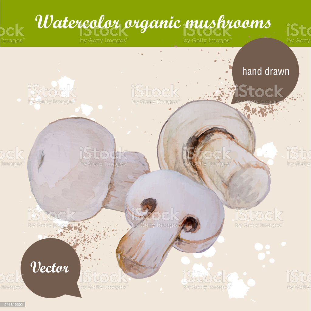 Watercolor hand drawn lot of champignon mushrooms vector art illustration
