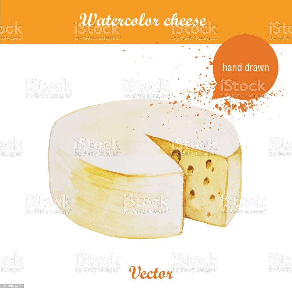 Watercolor illustration of cheese wheel. vector art illustration