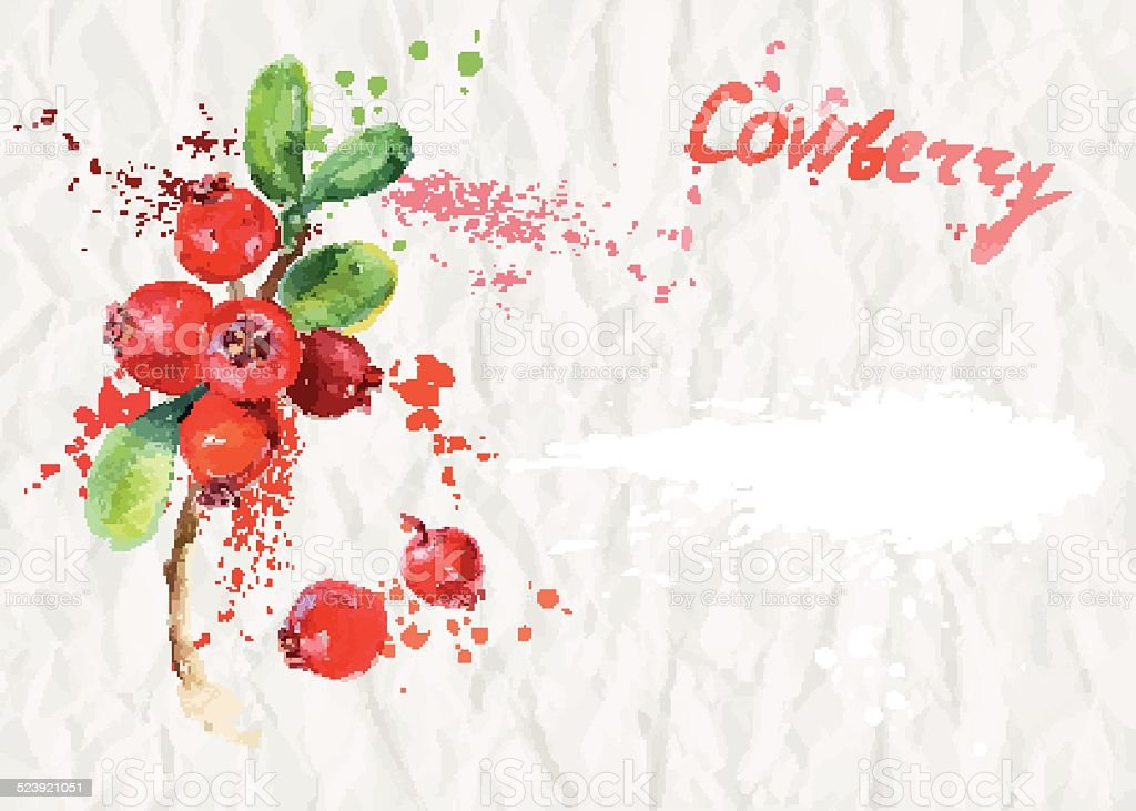 Watercolor illustration. Ripe cranberry vector art illustration