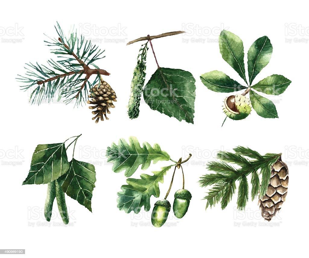 Watercolor leaves. vector art illustration