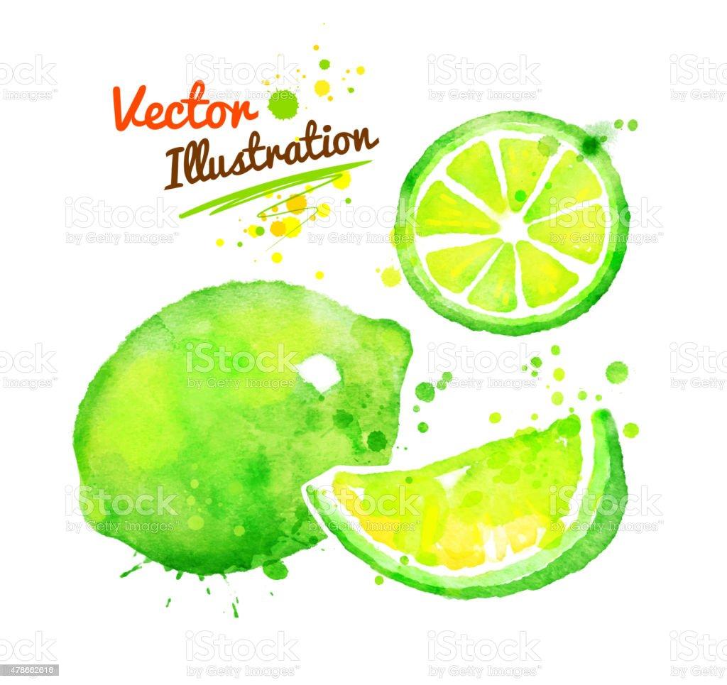 Watercolor lime. vector art illustration