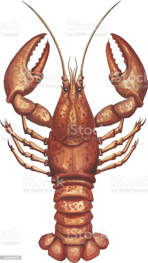 Watercolor  lobster vector art illustration