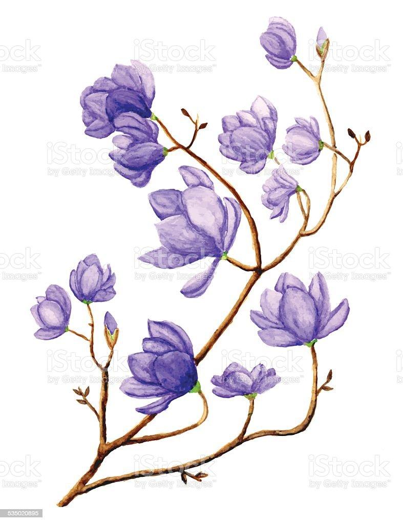 Watercolor Magnolia Flower vector art illustration