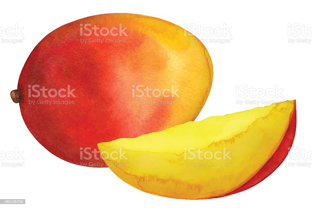 Watercolor mango fruit whole and slice vector art illustration