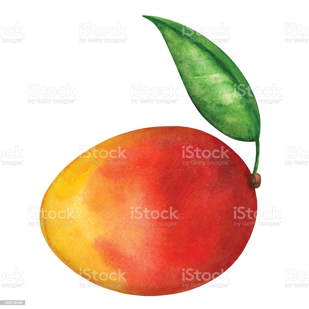 Watercolor mango fruit whole with leaf closeup isolated vector art illustration